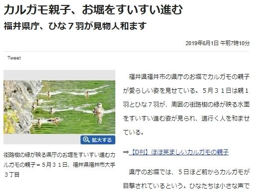fukui_news.jpg