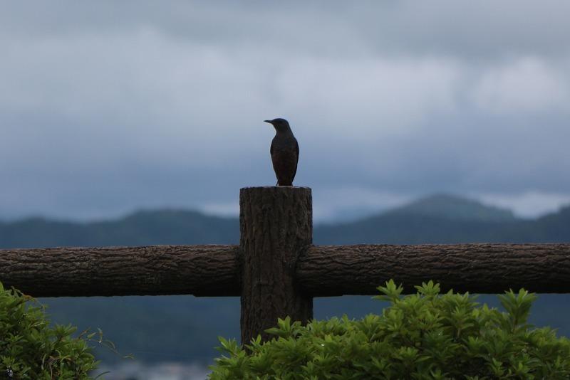 s-nishiyama3.jpg